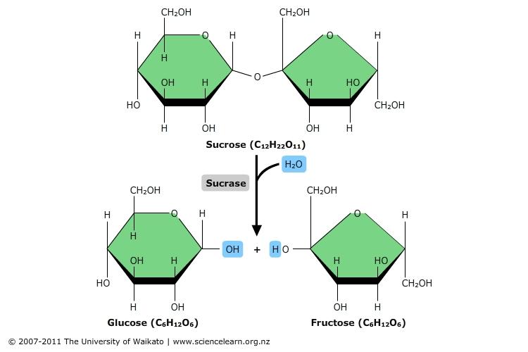 Hydrolysis reaction | Sciencelearn Hub
