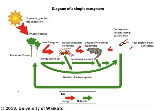 understanding nutrient interactions within simple ecosystem Populations and ecosystems unit map as a simple ecosystem case study understanding a food web diagram summative.