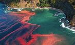 A spectacular red tide (non-toxic) in New Zealand.