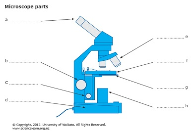 Microscope parts | Sciencelearn Hub