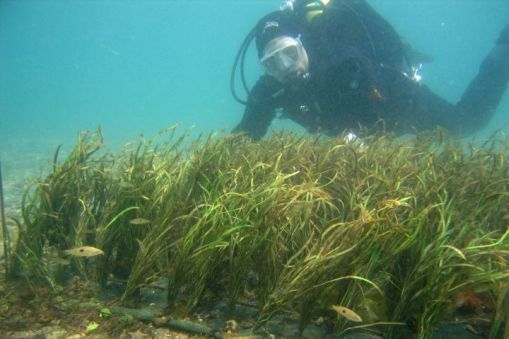 Artificial seagrass bed sciencelearn hub for Seagrass for landscaping