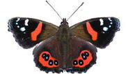A butterfly story in a primary classroom - Education Research